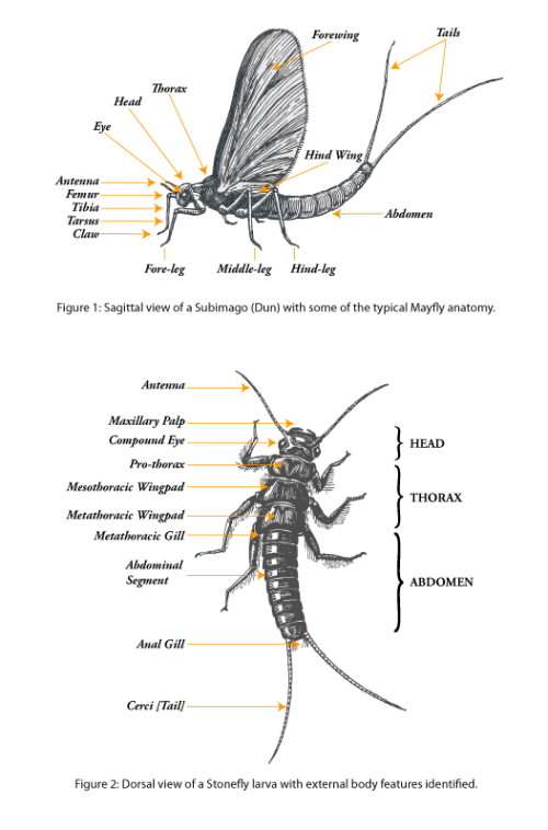 Insects_anatomy