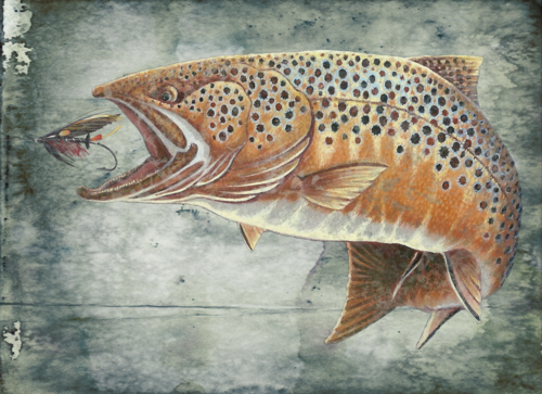 Trout+fly.psd