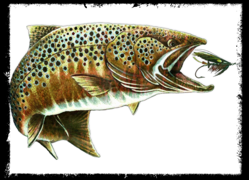 Trout+fly.psd2
