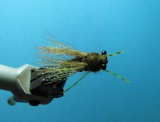 Cicada sbs 19
